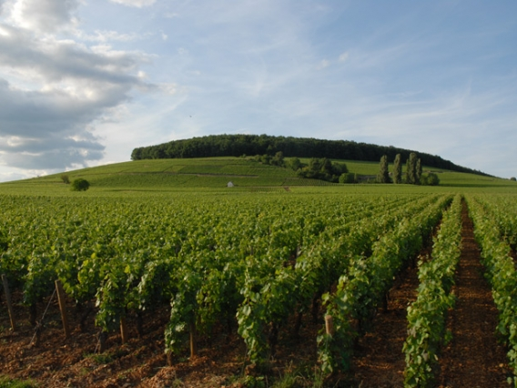 The vineyards at Domaine Francoise Andr