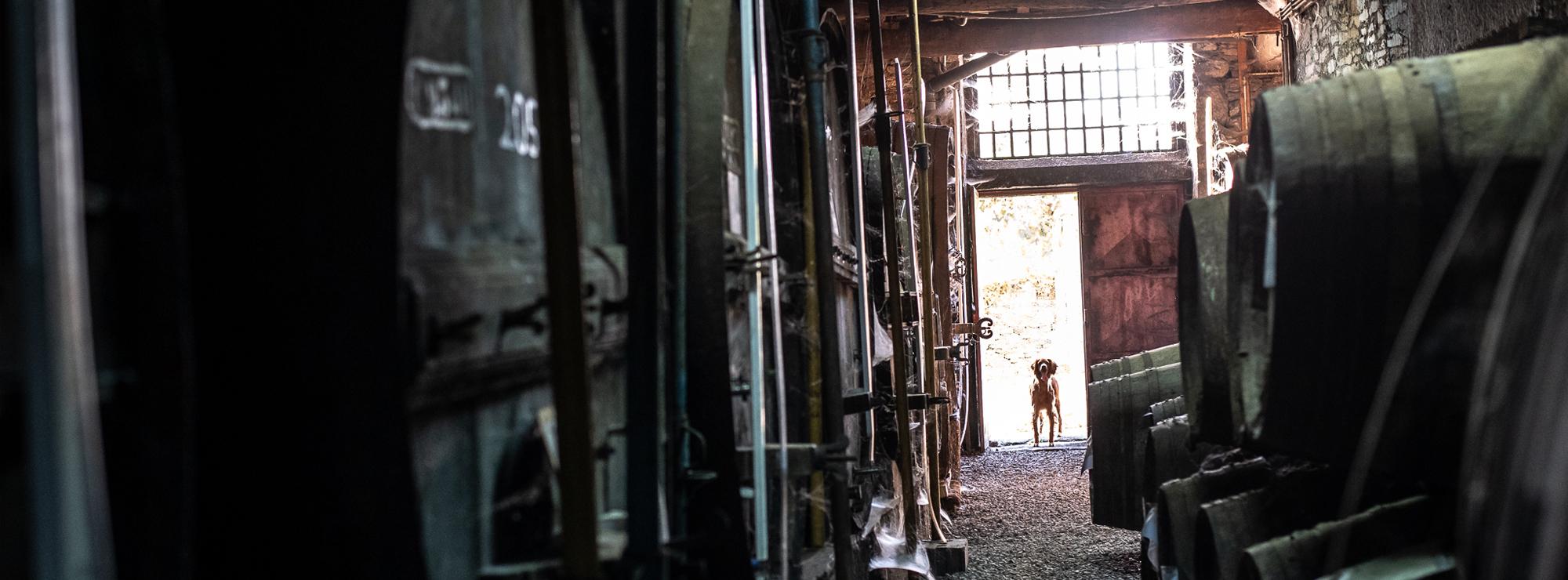 Barrels & Dog