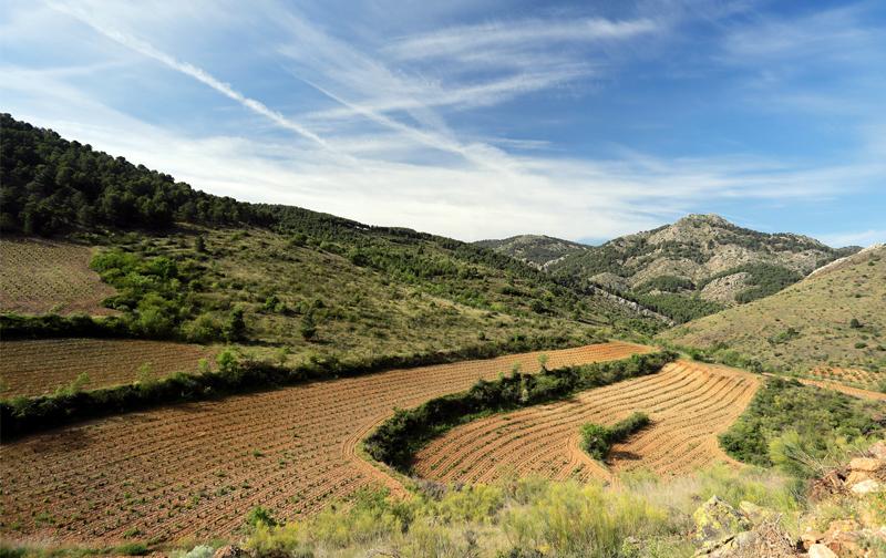 The Bodegas Frontonio Wines by Fernando Mora MW