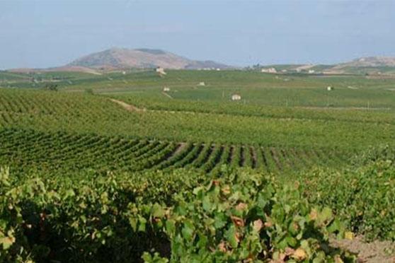 Casano vineyards