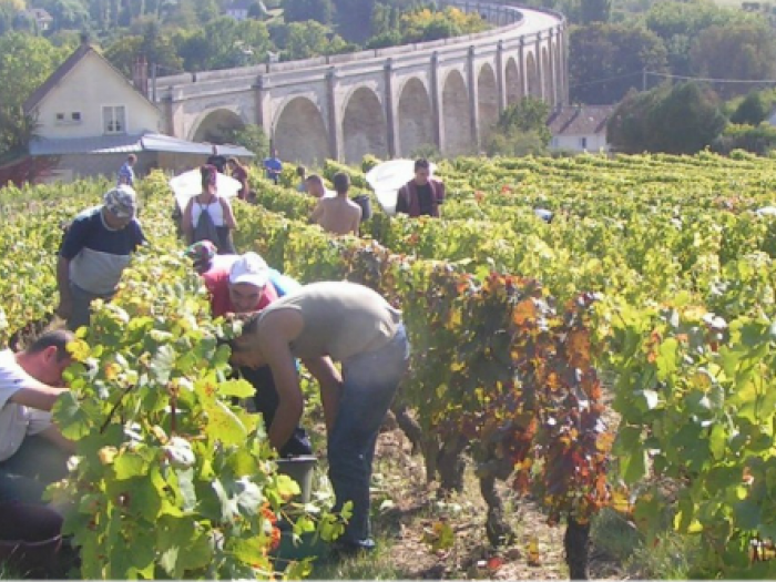 Harvest at the Foot of the Viaduct of Saint-Satur