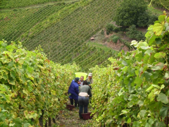 Harvest Time at Jean-Marie Haag