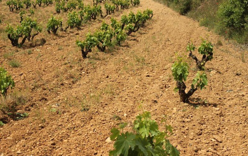 https://www.jascots.co.uk/media/images/uploaded/harvest.1622.featured.jpg