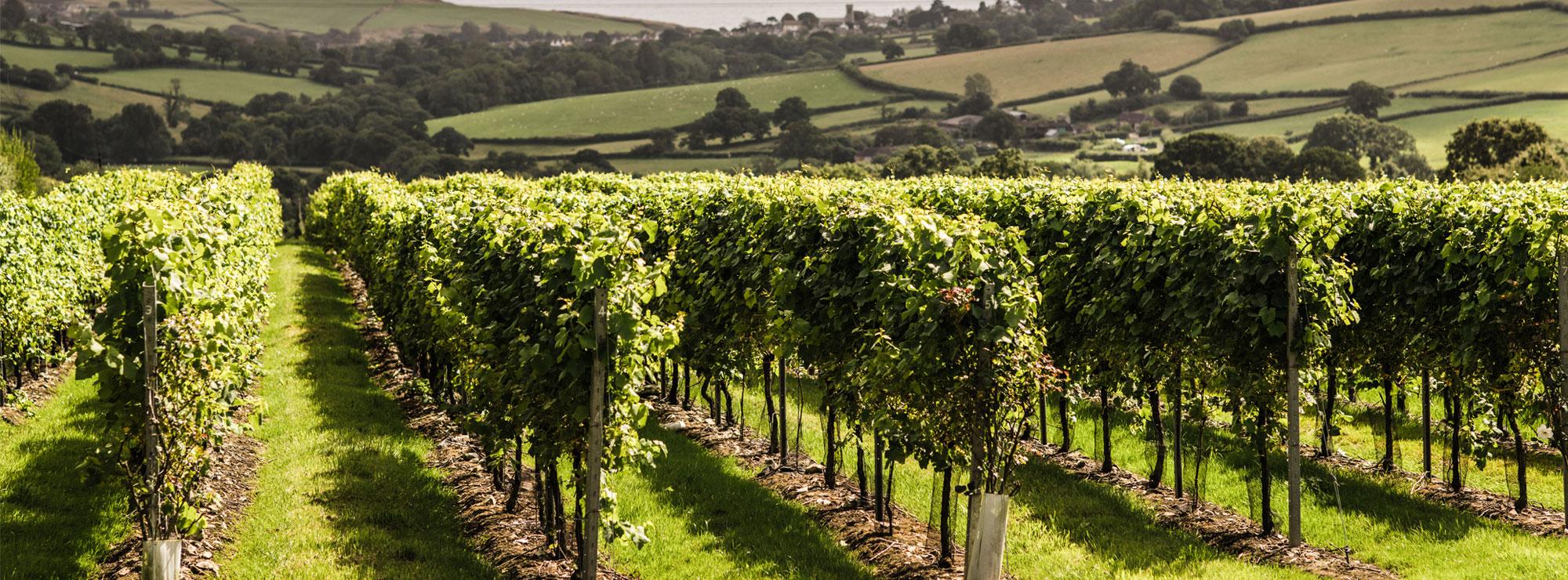 lyme bay vineyard