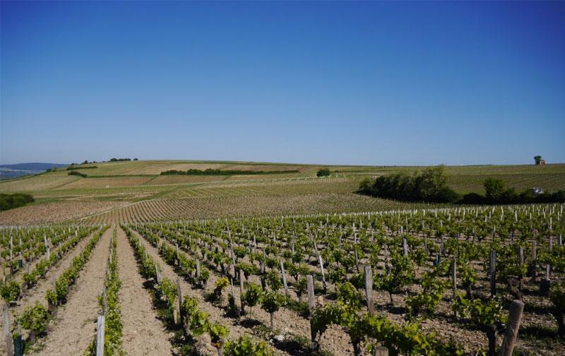 Women in wine: Meet Annick our Sancerre Producer