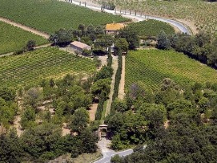 Stunnuing Vineyards at Villa le Prata