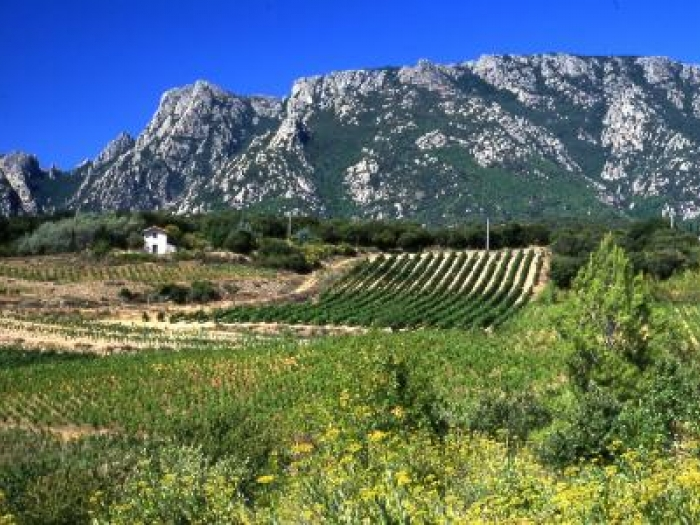 The picturesque vineyards of Maison Sabadie